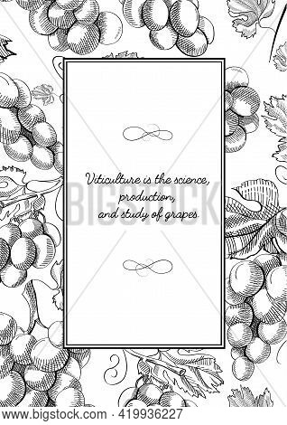 Monochrome Square Frame Composition With Grapes Bunches, Berries, Blossom And Useful Information In