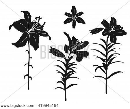 Set Of Silhouettes Of Lily Flowers On A Stem With Lms And A Separate Bud. Black Outline On White Bac