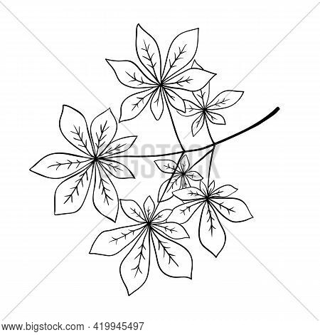 Tree Branch With Fan Leaves Like Horse Chestnut Or Buckeye, Outline Hand Drawn Sketch On White Backg