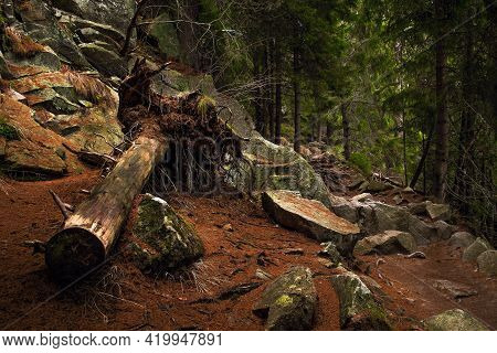 Deep Forest With Fallen Trunk. Photo Theme Is Wildlife, Nature Wealth, National Parks And Nature Res