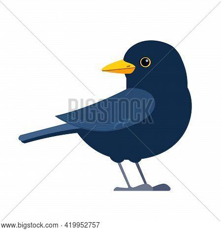 Common Blackbird Is A Species Of True Thrush. It Is Also Called Eurasian Blackbird. Scientific Name