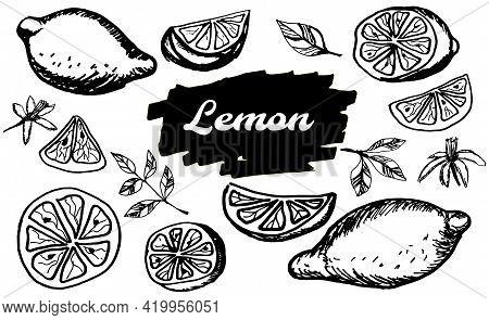 Hand Drawn Lemon. Doodle Citrus Slices, Blossom And Fruits, Lemon And Lime Outline Sketch For Juice