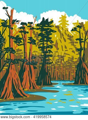 Wpa Poster Art Of Baldcypress Tree Growing In The Southern Swamp Of Apalachicola National Forest Loc
