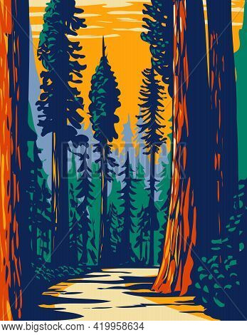 Wpa Poster Art Of The Simpson-reed Grove Of Coast Redwoods Located In Jedediah Smith State Park Part