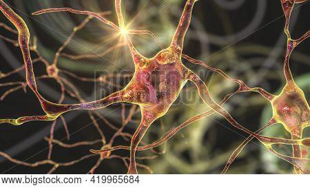 Neurons Of Dorsal Striatum, 3d Illustration. Dorsal Striatum Is A Nucleus In The Basal Ganglia