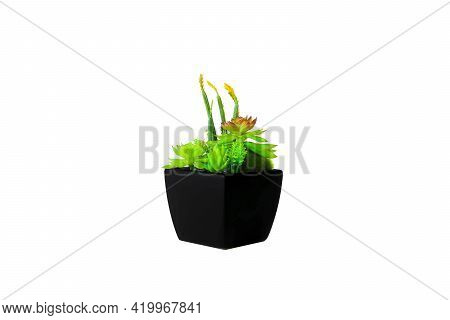 Artificial Flowers And Plants In Black Pot On White Background.