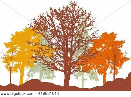 Autumn Woodland, Silhouette Of Bare Tree, Trees With Leaves And Pines. Beautiful Nature, Landscape.