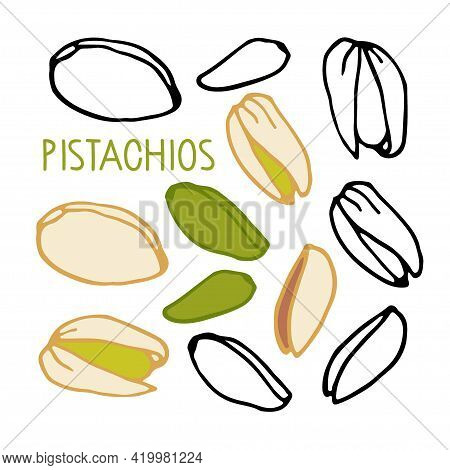 Pistachios. Hand Drawn Vector Nut. Doodle Linear Sketch. Organic, Fresh Cooking, Healthy Diet Ingred
