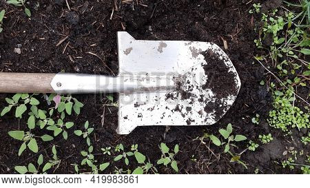 Dirty Shovel On Humus Heap, Earth And Plants. Agricultural Tools. Close-up Object.