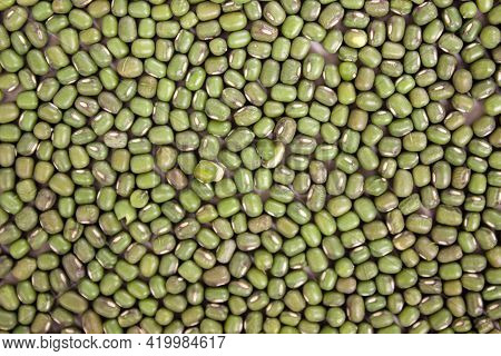 Green Bean Background Or Mung Bean. Green Bean Seed Background For Design.
