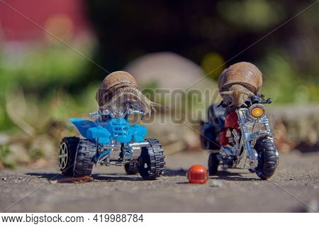 One Grape Snail On A Quad Bike, The Second On A Motorcycle On A Blurry Background. Selective Focus O