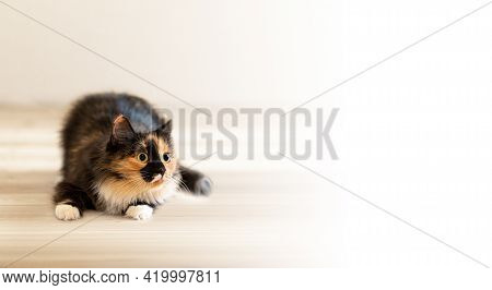 Advertising Banner With Three-color Playful Young Cat Lying On Wooden Floor And Focused With Curiosi