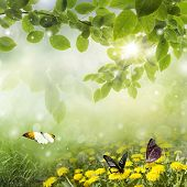 Fresh Spring bokeh: dandelions with butterfly in the meadow poster