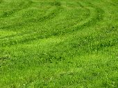 Mowing green grass texture on the meadow poster