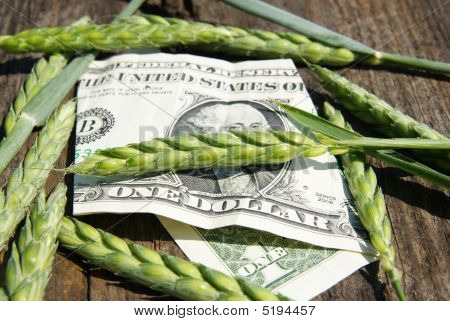Ear Of Wheat And One Dollar