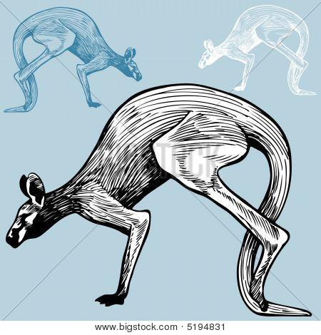 Kangaroo Drawing