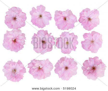 Cherry Flower Set