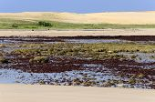 Brazil Pititinga (RN) Beach at low tide with algae in foreground and sand dunes in background poster