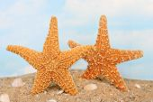 Two starfish upright on the beach in a playful position. Background sky has room for copy. poster