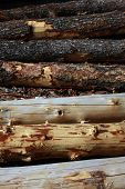 Logs in various stages of having their bark stripped form an interesting materials abstract poster