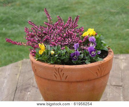 Flowers in garden pot
