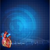 Cardiology technology background detailed human heart anatomy and normal cardiogram rhythm beautiful blue color design. poster