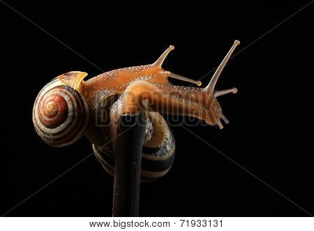 two cute snails hugging