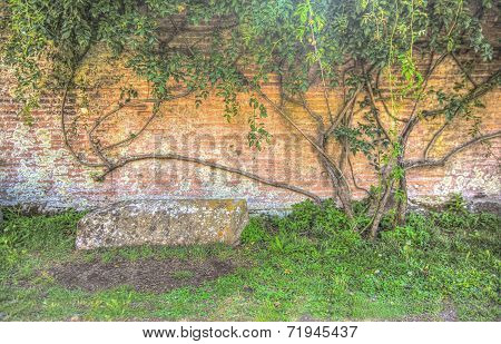 Stone Bench And Old Brick Wall