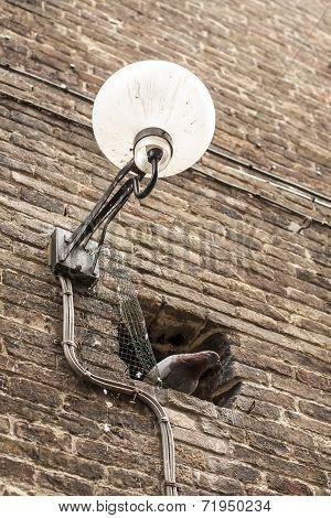 Street Light With Pidgeon