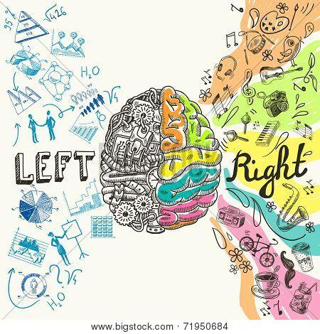 Brain hemispheres sketch