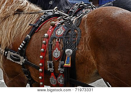 Horse ready for the parade with harness of decorations. poster