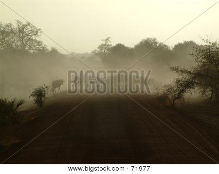 Cattle Herd In The Dust