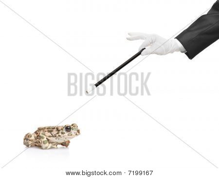 Magician holding a magic wand and a frog isolated on white background poster