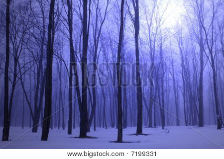 Blue winter foggy woods