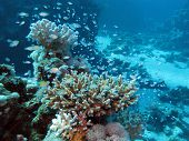 coral reef at great depth in tropical sea on blue water background poster