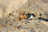 Small hermit crab comes out of his shell poster