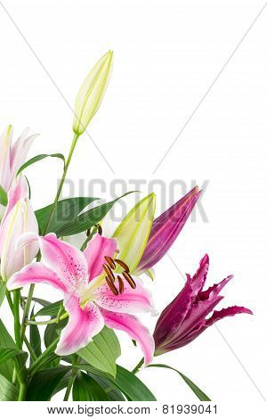 Lily Bouquet Isolated On White