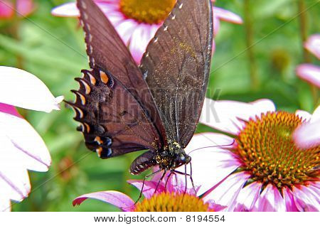 Butterfly amongst flowers