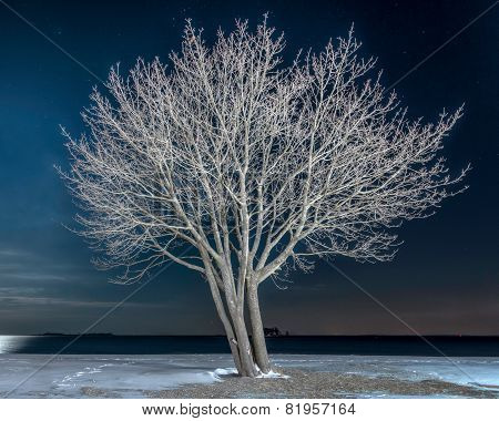 Lone Tree On Snowy Beach At Night