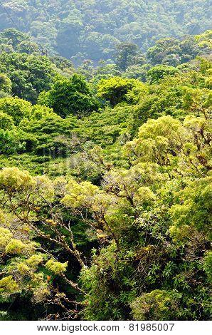 Mountain Cloud Rainforest