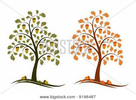 Two Versions Of Oak Tree