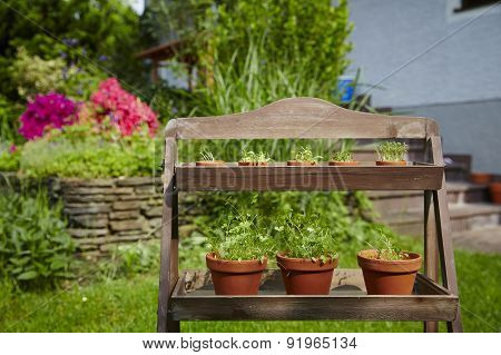 Fresh Herbage In Pots Grown In The Garden
