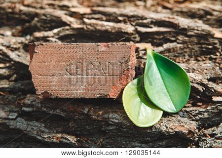 The Red Ceramic Brick on the Tree's Stump with Green Leaves,Nature Background,Spring Toned,Selective Focus