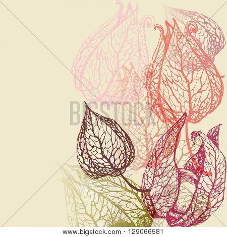 Floral background, herbal set
