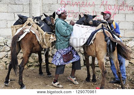 FOND BAPTISTE, HAITI - FEBRUARY 29, 2016:  Two unidentified people loading pigs purchased at the Fond Baptiste, Haiti market into a donkey's side packs.