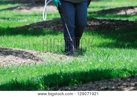 spraying pesticide in the lawn, gardening work poster