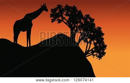 Giraffe silhouette in cliff scenery at the afternoon