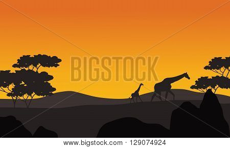 Giraffe silhouette in park scenery at the afternoon