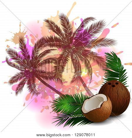 Coconut tropical nut fruit with cut vector illustration on abstract background with palms
