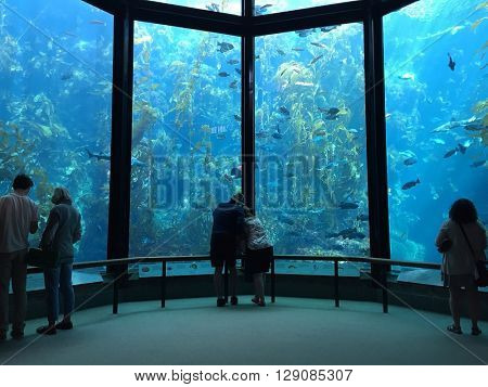 MONTEREY - MARCH 2: Visitors view fish in the Kelp Forest tank at The Monterey Bay Aquarium the on March 2, 2016 in Monterey, California, USA.